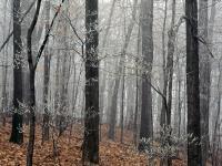 Forest_Frost_Edwin_Warner_Park.jpg