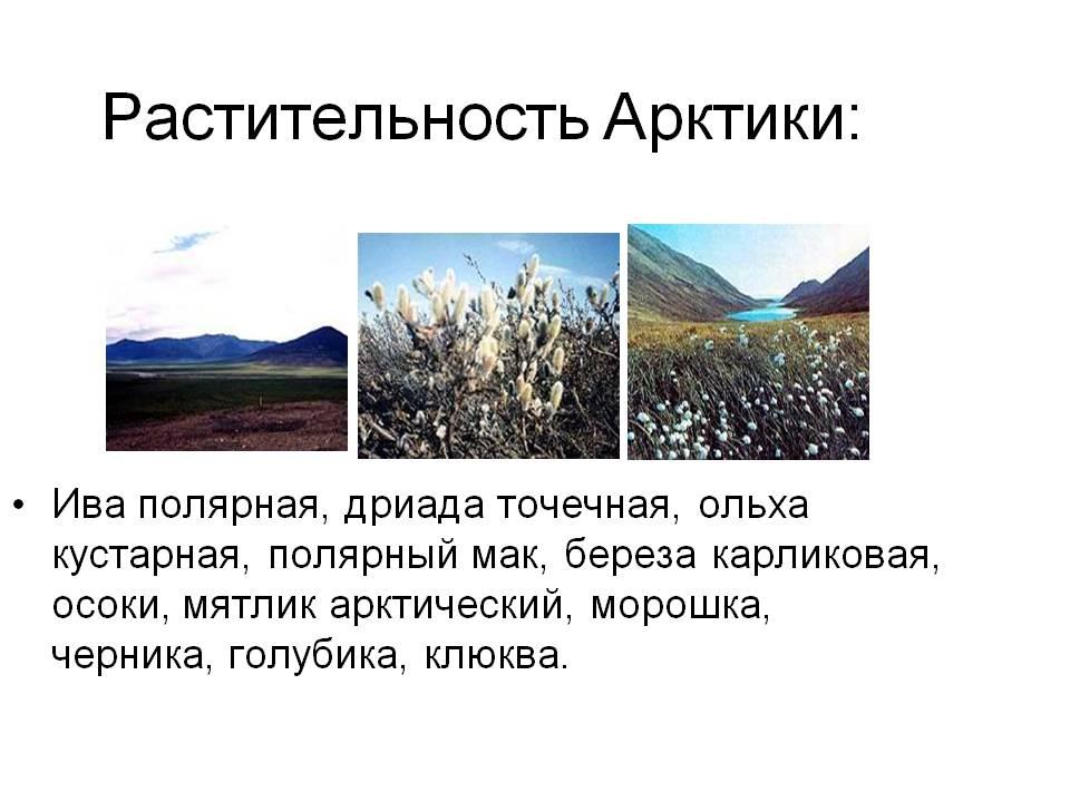 C:\Documents and Settings\User\Рабочий стол\Баяна ашык сабак 7а\Басталуы\0010-010-Rastitelnost-Arktiki.jpg