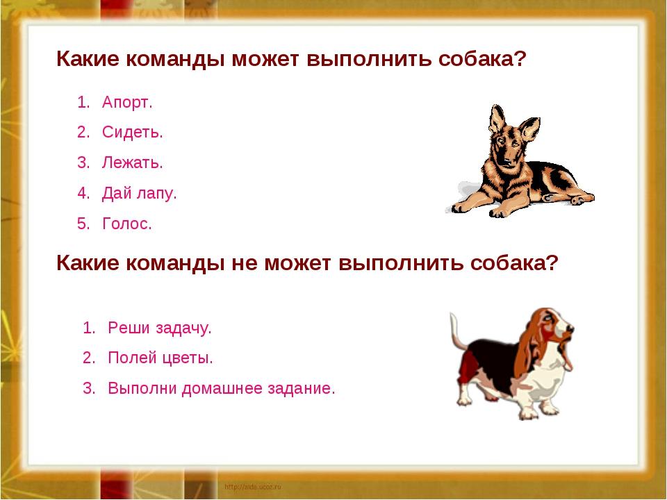 Какие команды может выполнить собака? Какие команды не может выполнить собака...