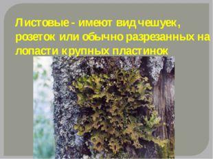 Листовые - имеют вид чешуек, розеток или обычно разрезанных на лопасти крупны