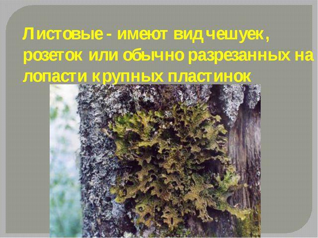 Листовые - имеют вид чешуек, розеток или обычно разрезанных на лопасти крупны...