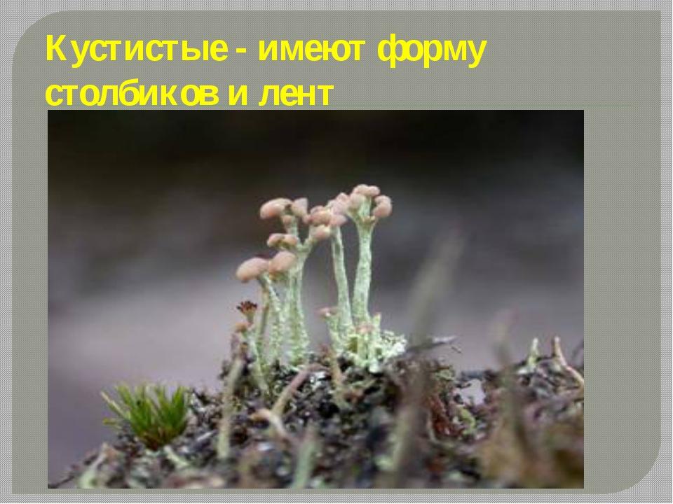 Кустистые - имеют форму столбиков и лент