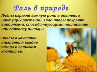 Пчёлы играют важную роль в опылении цветущих растений. Тело пчелы покрыто во