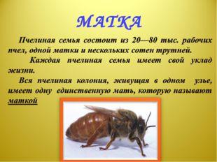 МАТКА