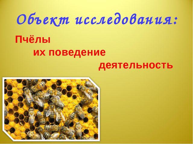 Объект исследования: Пчёлы их поведение деятельность