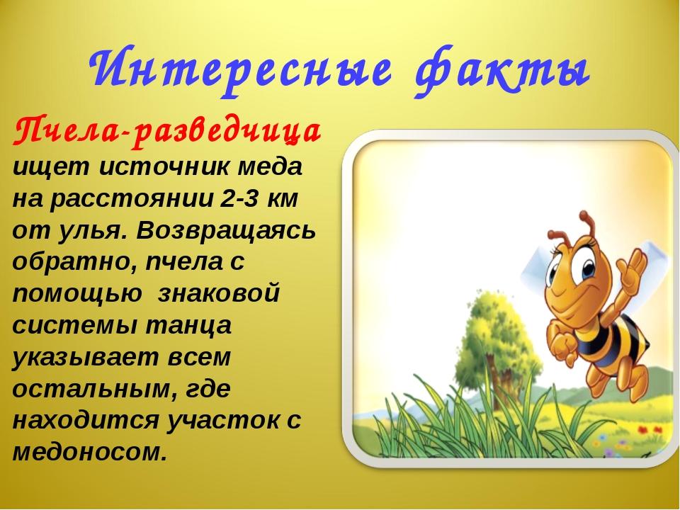 Интересные факты Пчела-разведчица ищет источник меда на расстоянии 2-3 км от...