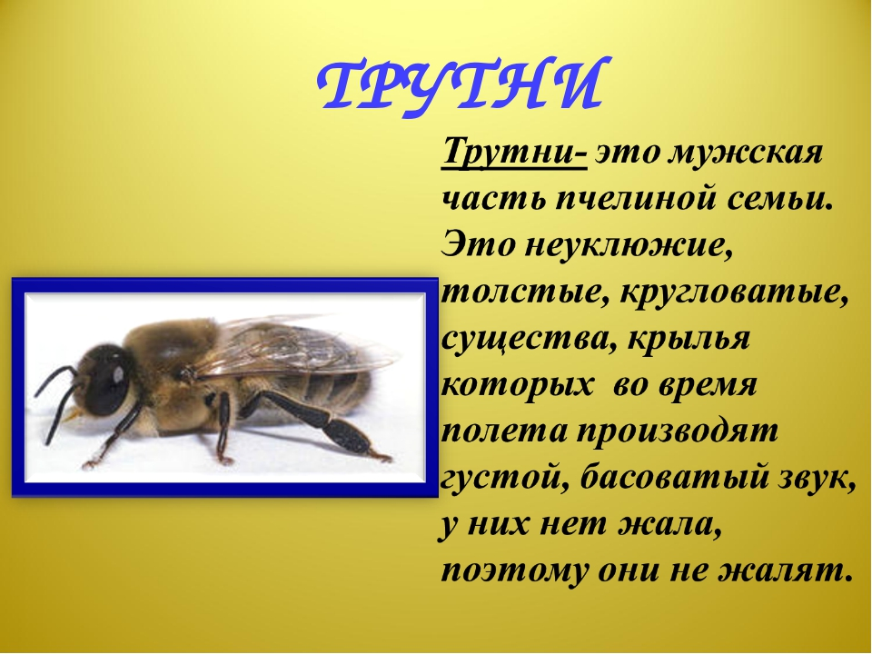 ТРУТНИ