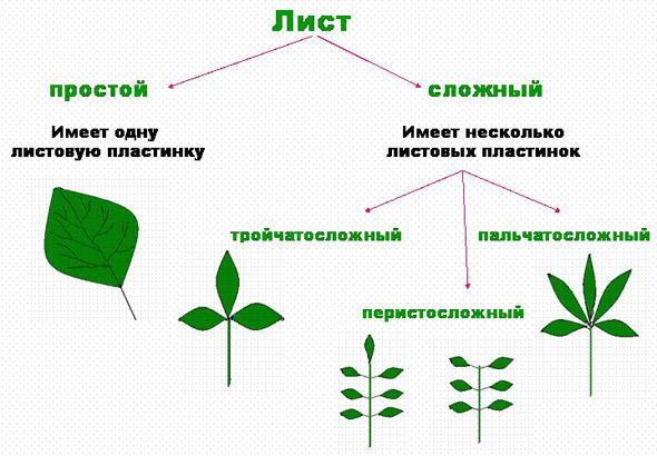 http://festival.1september.ru/articles/103104/img8.jpg