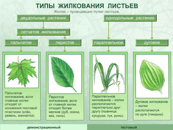 http://files.school-collection.edu.ru/dlrstore/1c1fd097-04f4-42b8-9bd4-e27306137ebf/Files%5C6_14.jpg