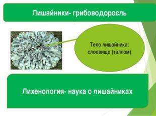 Лишайники- грибоводоросль Тело лишайника: слоевище (таллом) Лихенология- наук