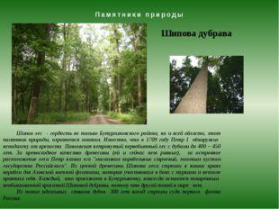 Памятники природы Шипова дубрава Шипов лес - гордость не только Бутурлиновско