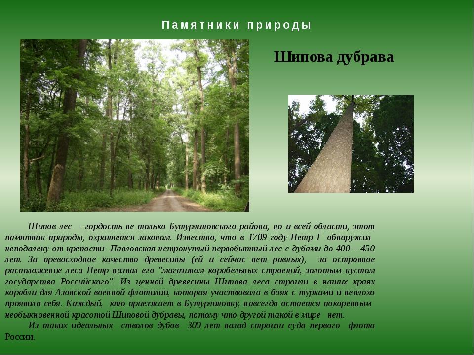 Памятники природы Шипова дубрава Шипов лес - гордость не только Бутурлиновско...