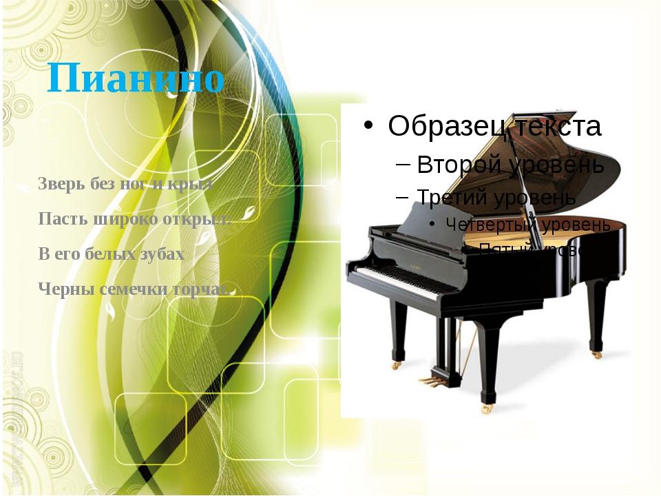 Пианино Зверь без ног и крыл Пасть широко открыл: В его белых зубах Черны сем...