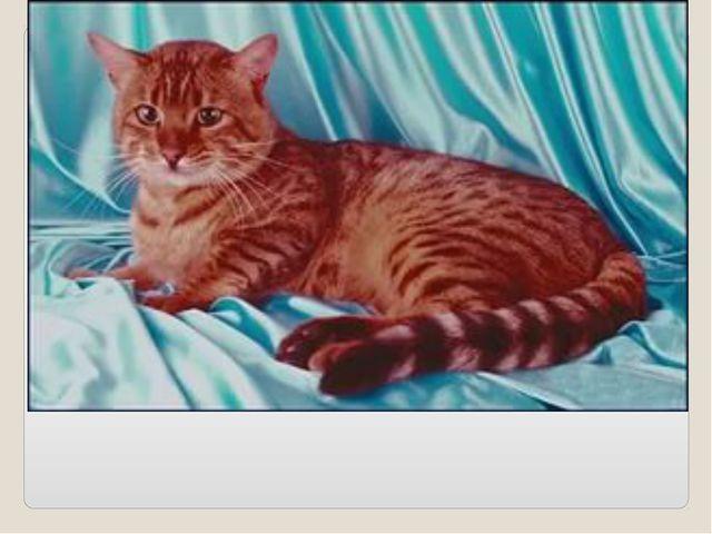 Мордочка усатая Шубка полосатая Часто умывается, А с водой не знается…(кошка)