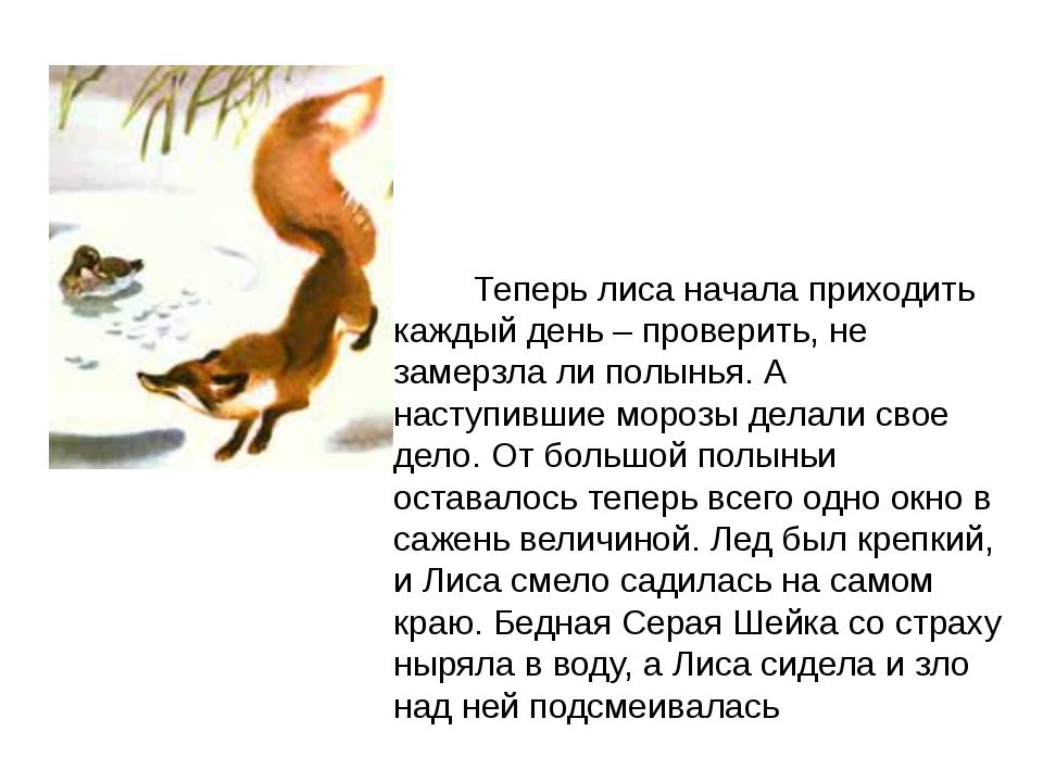 Теперь лиса начала приходить каждый день – проверить, не замерзла ли полынья...