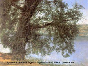 Дерево в тени над водой в окрестностях Кастель-Гандольфо