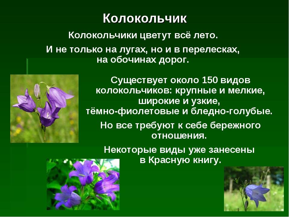 это картинка и описание цветка колокольчик дачный дом владивостоке