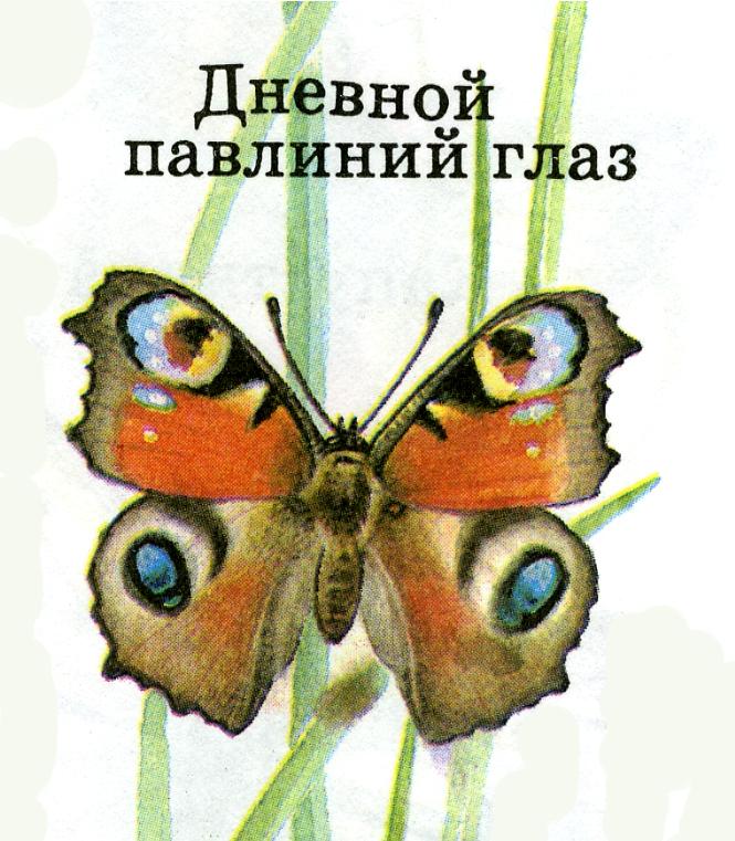 hello_html_5d4b065c.jpg