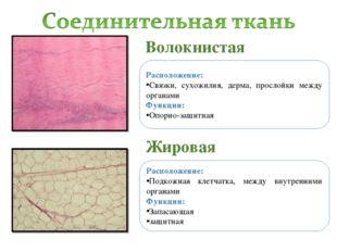 Волокнистая Жировая Расположение: Связки, сухожилия, дерма, прослойки между о