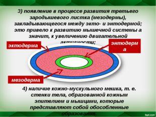 3) появление в процессе развития третьего зародышевого листка (мезодермы), за