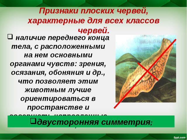 Признаки плоских червей, характерные для всех классов червей. наличие передне...