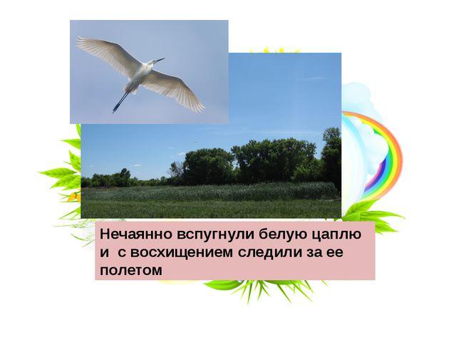 Нечаянно вспугнули белую цаплю и с восхищением следили за ее полетом