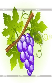 http://img.cliparto.com/pic/xl/183539/3079295-grape-cluster-with-green-leaves.jpg