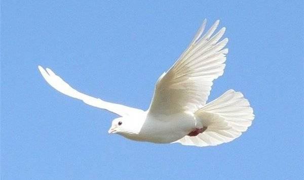 http://seotuition.ru/Portals/15/pigeon.jpg