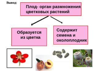 Плод- орган размножения цветковых растений Образуется из цветка Содержит семе