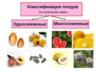 Классификация плодов (по количеству семян) Односемянные Многосемянные