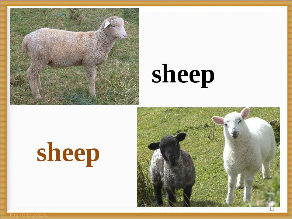 * sheep sheep