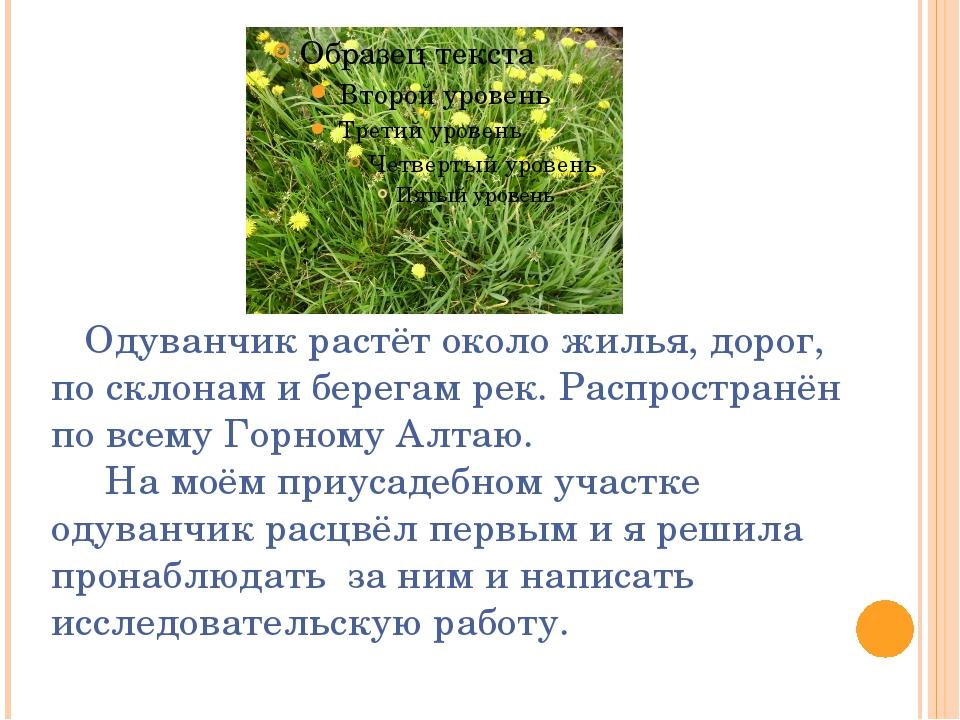 Одуванчик растёт около жилья, дорог, по склонам и берегам рек. Распространён...