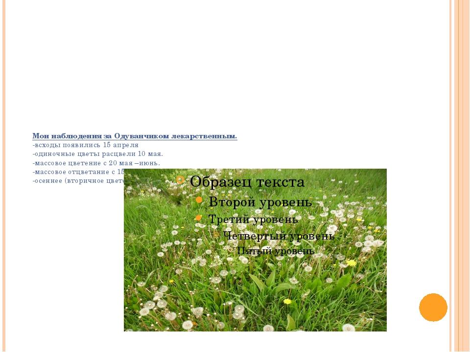 Мои наблюдения за Одуванчиком лекарственным.  -всходы появились 15 апреля -о...