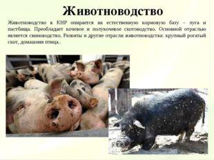 Животноводство Животноводство в КНР опирается на естественную кормовую базу –