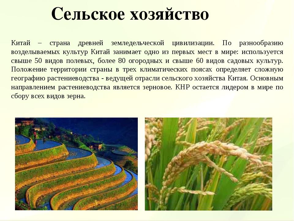 Китай – страна древней земледельческой цивилизации. По разнообразию возделыва...
