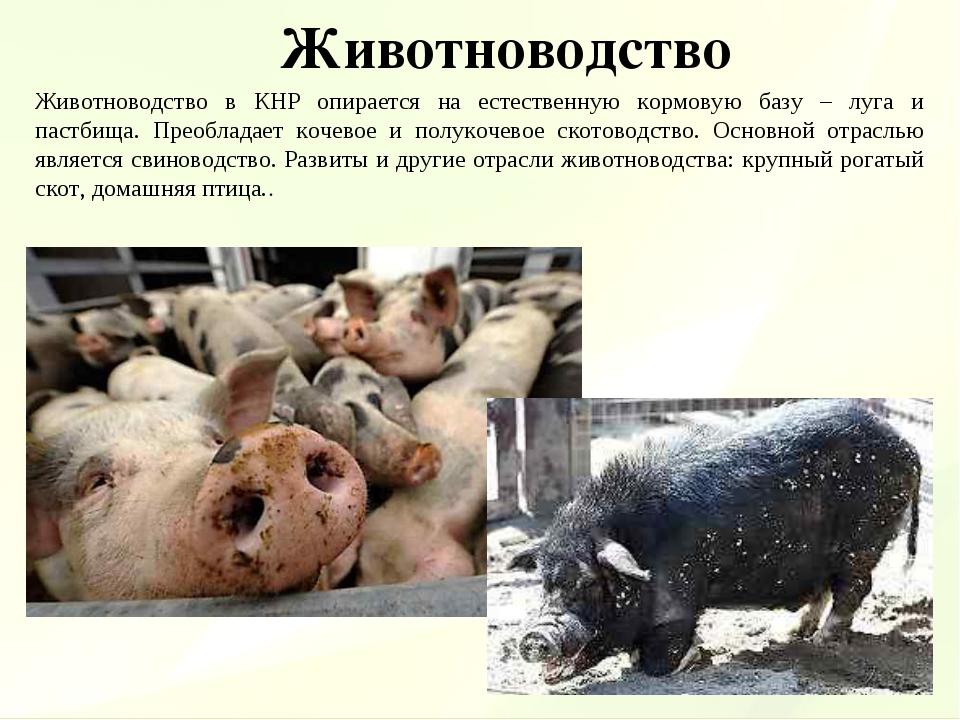 Животноводство Животноводство в КНР опирается на естественную кормовую базу –...