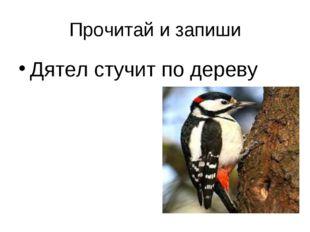 Прочитай и запиши Дятел стучит по дереву