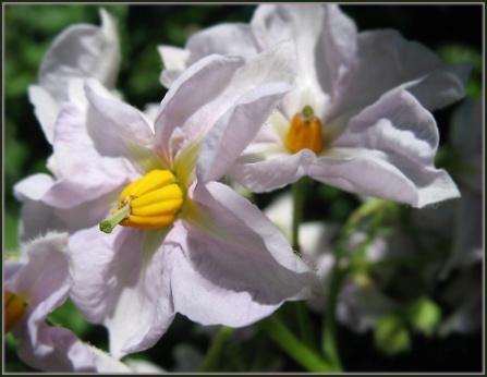 цветы кар.jpg