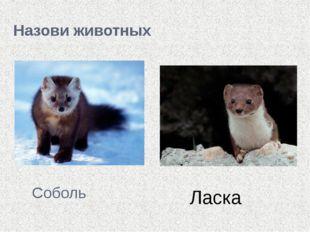 Назови животных Соболь Ласка