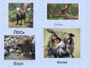 Олень Лось Енот Филин