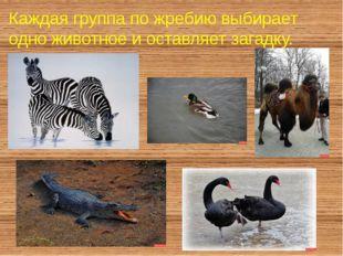 Каждая группа по жребию выбирает одно животное и оставляет загадку.