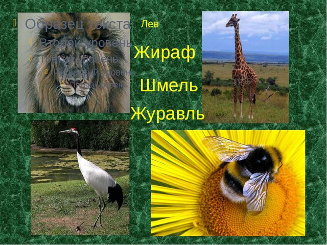 Лев Жираф Журавль Шмель