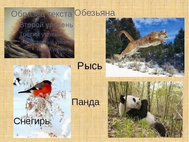 Обезьяна Рысь Снегирь Панда