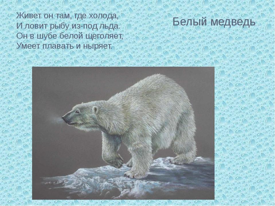 Живет он там, где холода, И ловит рыбу из-под льда. Он в шубе белой щеголяе...
