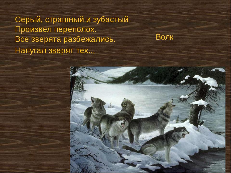 Серый, страшный и зубастый Произвел переполох. Все зверята разбежались. На...