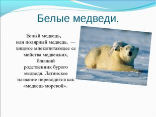 Белые медведи. Белый медведь, илиполярный медведь, — хищноемлекопитающеес