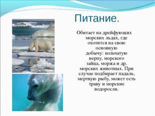 Питание. Обитает на дрейфующих морских льдах, где охотится на свою основную