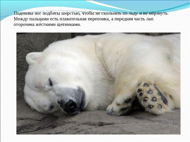 Подошвы ног подбиты шерстью, чтобы не скользить по льду и не мёрзнуть. Между...