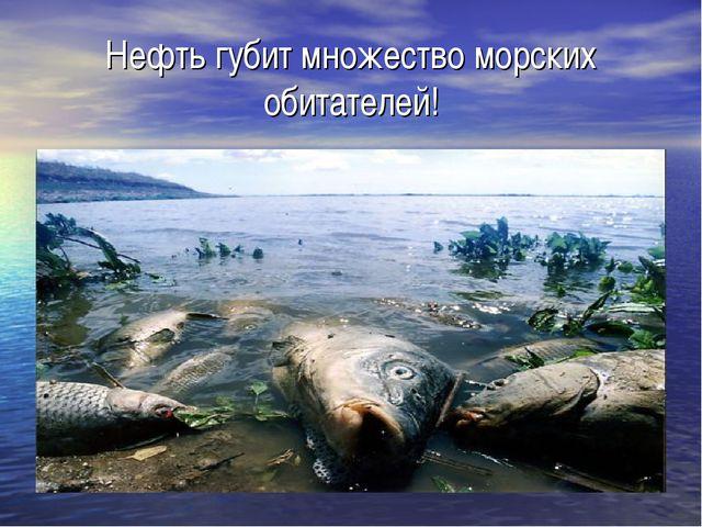Нефть губит множество морских обитателей!
