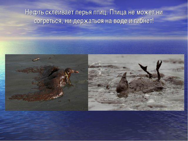 Нефть склеивает перья птиц. Птица не может ни согреться, ни держаться на воде...
